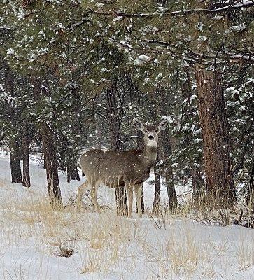 Westcliffe, Colorado